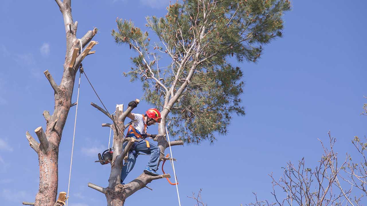 Arborist work site.